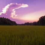 つくばの田んぼの夕景色。