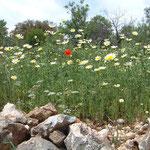 Kalkan Spring Meadow