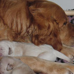 Fräulein gelb im Arm von Mama