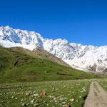 Am Fuße des Mt. Shkhara 5.193 m