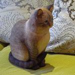 """Кот тайский """"Тебби поинт"""" в натуральную величину."""