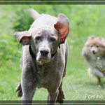 4 Wochen vor Paminas Tod - sie war kein wirklich alter Hund mit knapp 16 Jahren