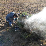Fast 50 Tannenbäume wurden dieses Jahr verbrennt.