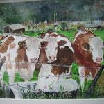 Kühe  in Maishofen