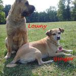 Louny und Ginger aus München