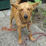 Phebi aus Bremen