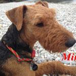 Mira aus Baierbrunn