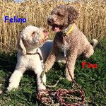 Fina und Felino aus Schwalmtal