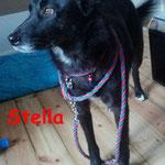 Stella aus Potsdam
