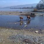 Nala und Bhanu am Bodensee