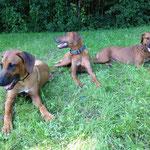 Kimani, Zina und Rayha