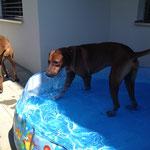 Dayo - die Wasserratte! :-))