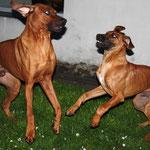 Dayo und Borgia