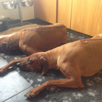 Chidima und Zina sind auch mal müde...
