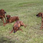 Zina, Rayha, Dayo und Borgia