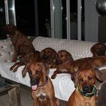 auf dem Sofa: Bhanu, Nala, Zina, Rayha und Dayo, vorne: Kimani und Anyango