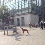 Nanu, ein Hirsch mitten in der Stadt?? :-)