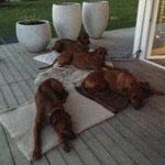 Nun sind alle müde nach dem schönen Nachmittag...