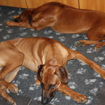 Borgia und Juma mal müde ...