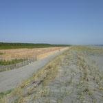 090 砂森地区の人工砂丘と松枯れ対策の植樹、後背地に住宅はない(三沢基地対策で移転済み)