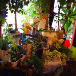 店内には大きな観葉植物も、樹形や品種にこだわり用意しています