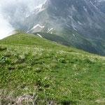 Abstieg Richtung Himmelecksattel