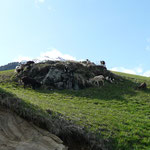 Ziegen am Giggelberg