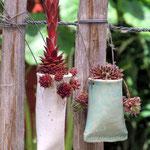 Zaunhängetüten mit Sempervivae