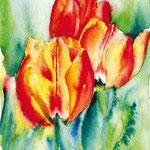 KH-A3-Tulpen3: Drei Tulpen