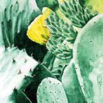 KH-K8 Kaktus: Du kannst auch blühen!