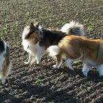 Boots, Timmy, Lotte