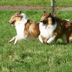 Lotte und Crispy
