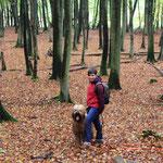 Rücktour durch den Herbstwald