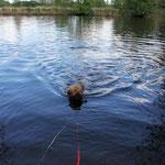 juchhuuu - Schwimmen! (allerdings an der Schleppi wegen der Strömung)