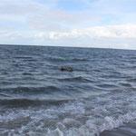"""ich bin ein """"Seehund"""""""