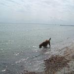 Das Ostseewasser schmeckt nicht wirklich.
