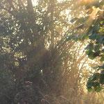 die Sonnenstrahlen kämpfen sich durch