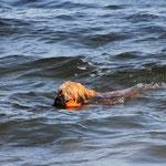 ein Seehund in seinem Element