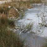 still ruht der See (naja ist nur ein Teich)
