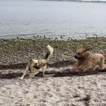 erst am Strand...