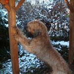 Apportierspielchen im Garten -> erst auf der Terrasse...