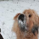 Nö: ich hab kein Schnee gefressen!