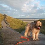 nun mach schon Frauchen! ich will runter an den Strand!!!