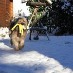 von wegen WASSERkong, der eignet sich auch im Schnee - juchee