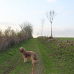 Der Hundeweg: ohne Schneewehen ;-))