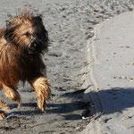 weil es heute mal windstill ist, bin ich der Sausewind ;-))