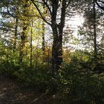 herbstlich duftender Wald...