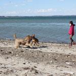...am Strand von Langballigau