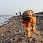 gestern am Strand von Langballigau