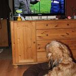 gestern Abend: Der V.I.P.-Hundeprofi -> bei uns zu Hause bin ich der V.I.P.-Dog höchst persönlich (fragt meine Leute ;-))